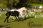 mondial.2011.percheron.210