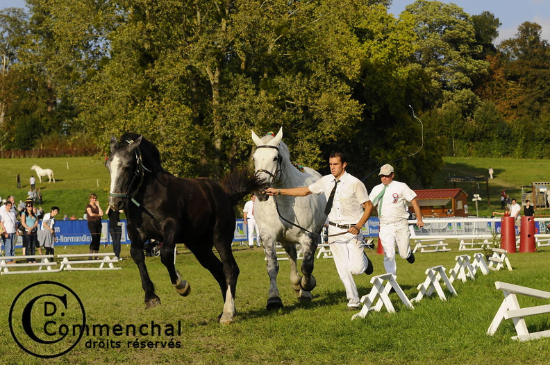 mondial.2011.percheron.216.jpg