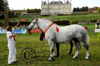 mondial.2011.percheron.236