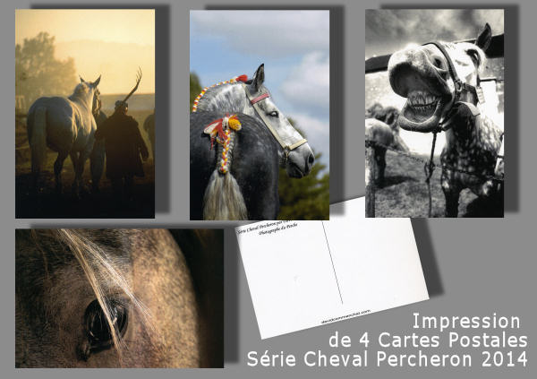 2014.cartes.post.cheval.percheron.jpg